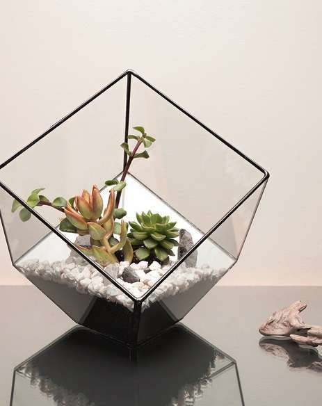 Terrario Aztec Cube by The Urban Botanist
