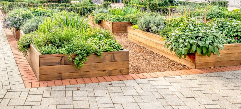Raised,Beds,In,An,Urban,Garden,Growing,Plants,Herbs,Spices