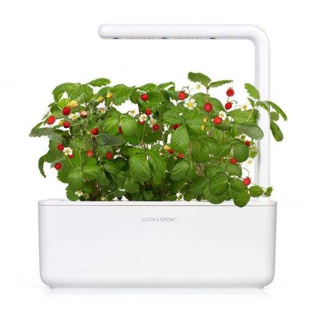 giardino idroponico Click and Grow Smart Garden